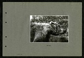 view The Bear 1899 digital asset number 1