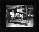 view Roosevelt Hartebeest Group - Natural History Museum digital asset number 1