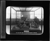 view The Lion Group from the Smithsonian-Roosevelt Expedition digital asset number 1