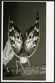 view Portrait of a Butterfly digital asset number 1
