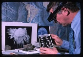 view Dr. Richard E. Grant Looking at Specimens in a Tray digital asset number 1