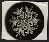 view Wilson Bentley's Snowflake 920, c. 1890 digital asset number 1