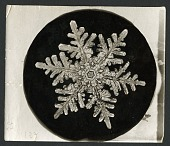 view Wilson Bentley's Snowflake 1152, c. 1890 digital asset number 1