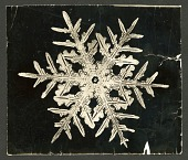 view Wilson Bentley's Snowflake 332, c. 1890 digital asset number 1