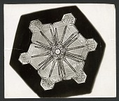 view Wilson Bentley's Snowflake 976, c. 1890 digital asset number 1