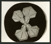 view Wilson Bentley Photomicrograph of Tabular Snowflake No. 1081 digital asset number 1