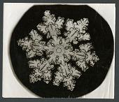 view Wilson Bentley Photomicrograph of Stellar Snowflake No. 1099 digital asset number 1