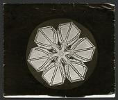 view Wilson Bentley Photomicrograph of Stellar Snowflake No. 172 digital asset number 1