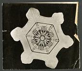 view Wilson Bentley Photomicrograph of Stellar Snowflake No. 1135 digital asset number 1