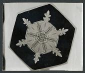 view Wilson Bentley Photomicrograph of Stellar Snowflake No. 304 digital asset number 1