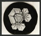 view Wilson Bentley Photomicrograph of Tabular Snowflake No. 1224 digital asset number 1