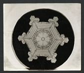 view Wilson Bentley Photomicrograph of Stellar Snowflake No. 382 digital asset number 1
