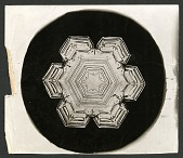 view Wilson Bentley's Snowflake 1206, c. 1890 digital asset number 1