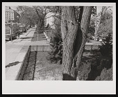 view Southwest Corner of Victorian Garden in the South Yard digital asset number 1