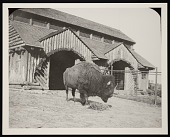 view National Zoological Park, Buffalo Barn digital asset number 1
