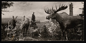 view Hall of North American Mammals, Natural History Building - Moose Habitat Group digital asset number 1