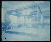 view Mammals Exhibits, Natural History Building - Coke's Hartebeest Group digital asset number 1