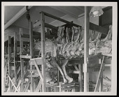 view Vertebrate Fossil Exhibit, Division of Paleontology, Natural History Building digital asset number 1