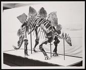 view Vertebrate Fossil Exhibit, Division of Paleontology, Natural History Building - Stegosaurus digital asset number 1