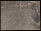view National Zoological Park, Puma Cub and Head Keeper William H. Blackburne digital asset number 1