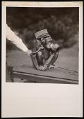 "view National Zoological Park, Chimpanzee ""Soko"" digital asset number 1"