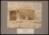 "view National Zoological Park, Alaska Peninsula Brown Bear ""Buster"" digital asset number 1"