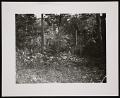 view Rock Pile in a Forested Area digital asset number 1