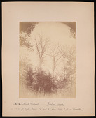 view Forest of Mississippi Valley (Record Photo), 1881 - No. 3 -- Black Walnut digital asset number 1