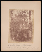 view Forest of Mississippi Valley (Record Photo), 1881 - No. 6 -- Black Walnut digital asset number 1