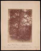 view Forest of Mississippi Valley (Record Photo), 1881 - No. 7 -- Black Walnut digital asset number 1