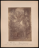 view Forest of Mississippi Valley (Record Photo), 1881 - No. 10 -- White Elm digital asset number 1
