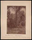 view Forest of Mississippi Valley (Record Photo), 1881 - No. 13 -- Winter Grape digital asset number 1