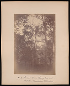 view Forest of Mississippi Valley (Record Photo), 1881 - No. 14 -- General View, Showing Vines and Mistletoe digital asset number 1