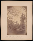 """view Forest of Mississippi Valley (Record Photo), 1881 - No. 15 -- A """"clearing"""" near the river bank digital asset number 1"""