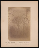 view Forest of Mississippi Valley (Record Photo), 1881 - No. 22 -- Sycamore digital asset number 1