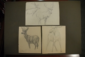 view Dugmore, A. Radclyffe (Arthur Radclyffe), 1870-1955, artist. Pencil sketches of caribou digital asset: Dugmore, A. Radclyffe (Arthur Radclyffe), 1870-1955, artist. Pencil sketches of caribou