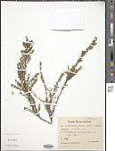 view Muraltia ericaefolia DC. digital asset number 1
