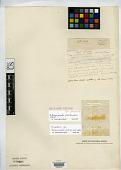 view Calamagrostis falklandiae Steud. digital asset number 1