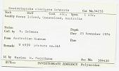 view Gastrolepidia clavigera digital asset number 1
