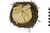 view Eastern Meadowlark digital asset number 1