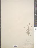 view Neotorularia humilis (C.A. Mey.) Hedge & J. Léonard digital asset number 1