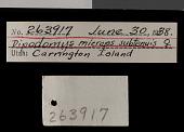 view Dipodomys microps subtenuis Goldman, 1939 digital asset number 1
