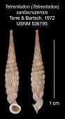 view Tetrentodon (Tetrentodon) santacruzensis digital asset number 1