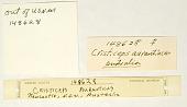 view Cristiceps aurantiacus digital asset number 1