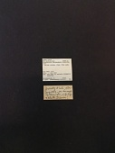 view Fluminicola coloradensis digital asset number 1