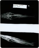 view Pimelodus coruscans digital asset number 1