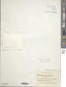 view Anabaena oscillarioides digital asset number 1