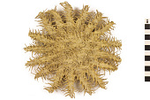 view Crown Of Thorns Starfish digital asset number 1