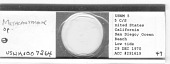 view Calyptronema sp. digital asset number 1