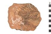 view Fossil Fern digital asset number 1